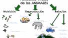 Aprende: Funciones vitales animales